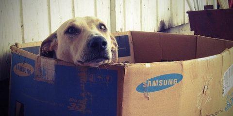 Cucce Per Cani Al Tuo Cane Serve Una Cuccia Sei Nel